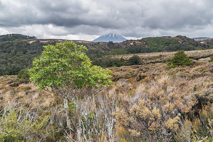 Voyager en Nouvelle-Zélande