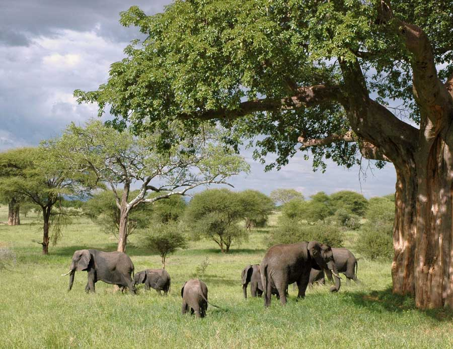 safari en famille